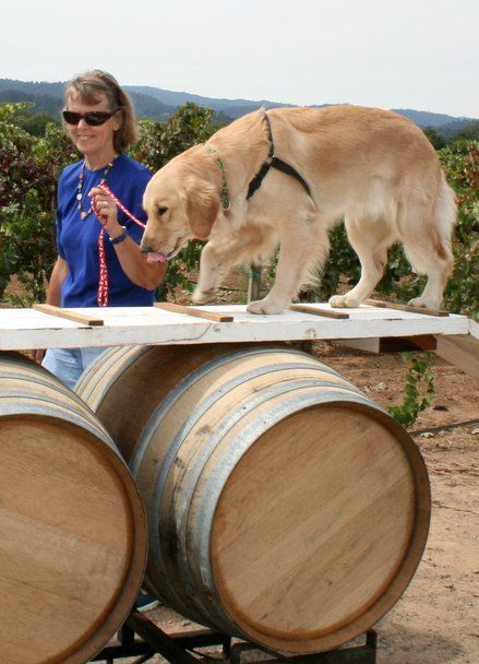 Barks and Art in the Vineyard