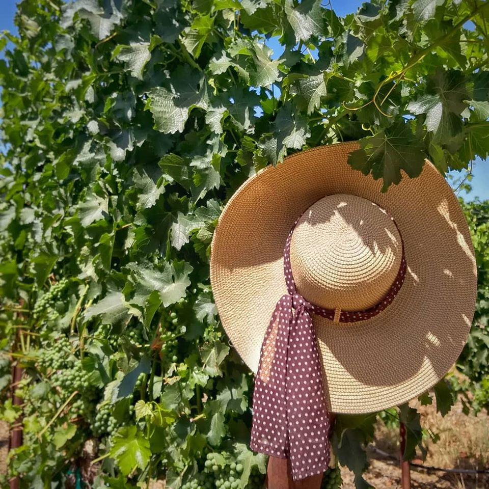 Self-Guided Vineyard Walks